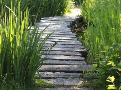 Weg am Teich